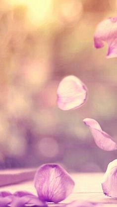 http://reeseybelle.blogspot.com/2015/01/floral-jar-wallpapers-colorkeyboard-go.html?m=1