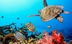 Un terzo del patrimonio naturale minacciato dalle trivelle 2