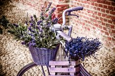 bikes with baskets are the best
