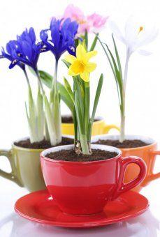 for spring extravaganza? :)
