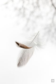 One feather emerging from misty background. Pastel Wallpaper, Wallpaper Backgrounds, Art Manga, Most Beautiful Wallpaper, Feather Art, White Aesthetic, Aesthetic Wallpapers, Cute Wallpapers, White Flowers