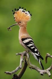 Resultado de imagem para ptaki