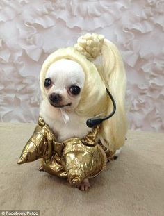 Pets on parade: Costume competition brings out the funny, the ...