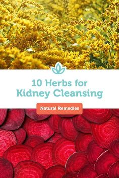 A healthy diet, exercise, and staying hydrated are essential for supporting your kidneys. For a little extra help, consider the following kidney cleansing herbs. #kidneycleanseherbs #herbsforcleansing #kidneycleansing #GroundTurmeric #Turmeric #TurmericPills Turmeric Curcumin Benefits, Turmeric Pills, Turmeric Uses, Turmeric Plant, Turmeric Vitamins, Turmeric Water, Turmeric Extract, Natural Colon Cleanse Detox