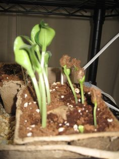 Seed Starting – Tips and Tricks...some fantastic tips and tricks. I'm so ready for this!!!!