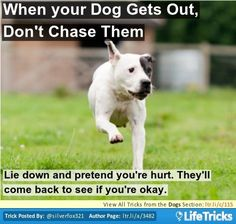 Dogs - When your Dog Gets Out, Don't Chase Them