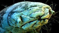 millipede head SEM