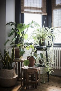 What is a plant stand? Plant stand is an ornamental element that helps you display your interior or outdoor plants on a beautiful platform. Plants stands come in a range of sizes, forms, . Read Best Plant Stand Ideas for Your Own Forest Bay Window, Plant Decor, Indoor Gardens, Decor, Plant Stand, Living Room Plants, Interior, Cool Plants, Home Decor