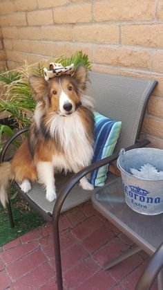 http://sheltienation.com/wp-content/uploads/2015/08/sheltie-in-hat.jpg?utm_source=Sheltie+Nation+Subscribers&utm_campaign=bb4115a757-RSS_EMAIL_CAMPAIGN&utm_medium=email&utm_term=0_f235c5a63f-bb4115a757-87202577