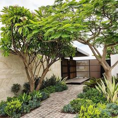 Urban Garden Design A small yard shouldn't be uninspiring. Learn how to transform what little space you have into an urban oasis by getting on board with vertical gardens, climbing vines and potted feature plants. Small Courtyard Gardens, Small Courtyards, Small Backyard Gardens, Backyard Garden Design, Vertical Gardens, Small Garden Design, Small Gardens, Backyard Landscaping, Landscaping Ideas