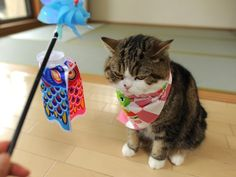 Maru's Children's Day outfit! He doesn't look like he approves!!