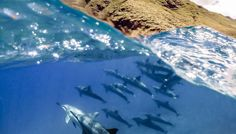 GoPro Channel | Dolphins in Hawaii