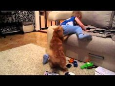#Cat Plays With The Kid - #funny #cute