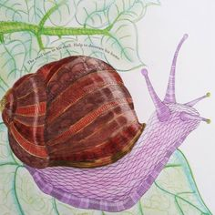 Snail 🐌... #AnimalKigdom #MillieMarotta #Arterapia #Art #Milliemarottaanimalkigdom #MillieMarottas #reinoAnimalLivro #Relax #Color #Antisterss #Snail #Home #Decoration #ColouringBook #adultcoloringBook #Book #Hi