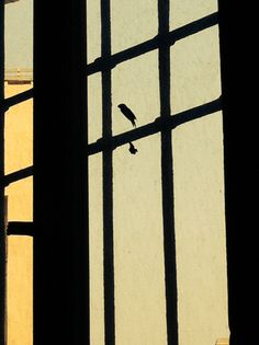 Cage is your mind Padova, Cage, Mindfulness, Artist