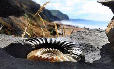 austin_fossils_08