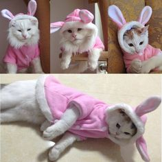 2016 New Cute Pet Cat Clothes Easter Bunny Costume Cat Dog Hoodie Coat Fleece Warm Rabbit Dressing Up Outfit Clothing for Cats 4 #dog #pet #clothes #costumes #cat #cute