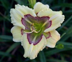 Daylily Blog - Gardening in Virginia: Small flowers, part I