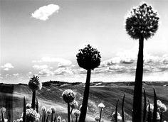 Cicconi Massi Lorenzo - Marche landscape