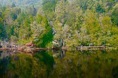 Wasserspiegelungen im Gordon River bei der Gordon River Cruise - Tasmanien