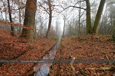 Ochtendmist omgeving Eerbeek, op dinsdag 9 december 2014