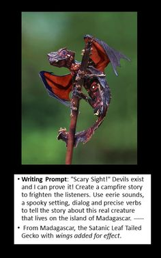 writing prompt -- creative writing -- dragons are real --