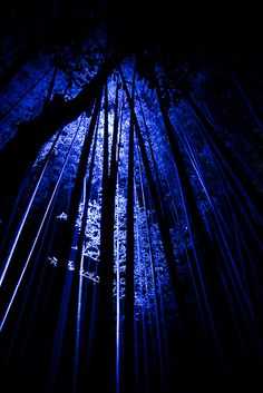 Arashiyama #japan #kyoto ჱܓ ჱ ᴀ ρᴇᴀcᴇғυʟ ρᴀʀᴀᴅısᴇ ჱܓ ჱ ✿⊱╮♡❊**Have a Good Day**❊ ~ ❤✿❤ ♫ ♥ X ღɱɧღ ❤ ~ Fr 9th Jan 2015