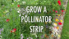 How And Why You Should Grow A Pollinator Strip In Your Veg Patch We need pollinators to help use pro Vegetable Garden Planner, Veg Garden, Garden Art, Rustic Gardens, Farm Gardens, Veg Patch, Mother Earth News, Annual Flowers, Garden Signs