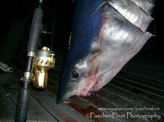 Google Image Result for http://www.orangebeach.ws/2007/News/2007-12-17-609lb_Mako_Shark_Photos/609_pound_Mako_Caught_on_Van_Stahl_Reel.jpg