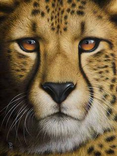 """Portrait of a Cheetah"" – x – oil on canvas. ""Portrait of a Cheetah"" – x – oil on canvas. Cute Cats And Kittens, Big Cats, Beautiful Cats, Animals Beautiful, Animals And Pets, Cute Animals, Gato Grande, Tier Fotos, Mundo Animal"