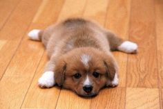 Puppies will never want to leave a nice warm floor