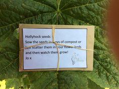 Hollyhock Seeds by ParkBeauty on Etsy