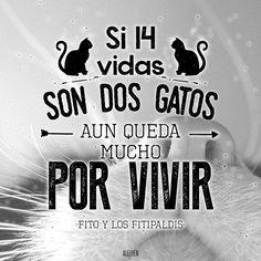 """""""14 vidas son dos gatos"""" Fito y los Fitipaldis"""