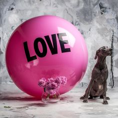5 foot Big Love Ball with Trudy | Color : Elsa | Photo by Bob Garlick