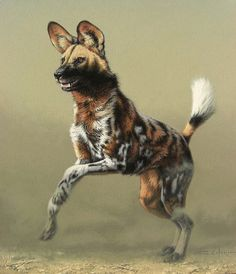 Weird Dog Names - Dog And Puppies Cartoon - Cutest Dog Names - Dog Walking Quotes - Dog Pictures Nature - Nature Animals, Animals And Pets, Baby Animals, Funny Animals, Cute Animals, Animal Paintings, Animal Drawings, Beautiful Dogs, Animals Beautiful