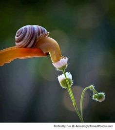 The Most Amazing Up-Close Snail Photos You'll Ever See! Ukrainian photographer Vyacheslav Mishchenko catches these unbelievably stunning up-close photographs of snails, and I've never wanted to be friends with a snail more than this moment. All Nature, Amazing Nature, Science Nature, Flowers Nature, Green Nature, Fotografia Macro, Beautiful Creatures, Animals Beautiful, Cute Animals