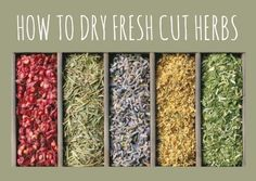 How to Dry Fresh Cut Herbs - Step by Step via www.backdoorsurvival.com