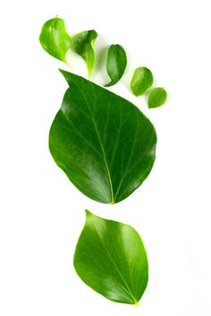 Photo about Eco footprint made from leaves over white background. Image of detail, environmentally, carbon - 20082484 Green Cleaning, Footprint, Shades Of Green, Life Is Beautiful, Free Photos, Greenery, Photo Art, Eco Friendly, Plant Leaves