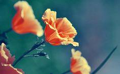 красота, природа, цветы