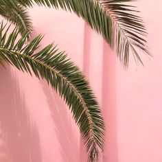 53 New Ideas For Wallpaper Iphone Pastel Rosen Pastel Photography, Texture Photography, Tumblr Photography, Tumblr Aesthetic Photography, Leaf Photography, Wallpapers Rosa, Wallpaper Backgrounds, Iphone Wallpaper, Wallpaper Plants