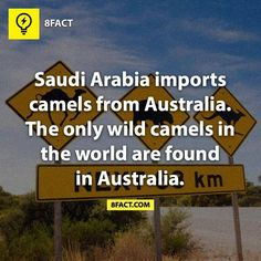 """""""Feral"""" might be a better term than """"wild"""", as camels are not a species native to Australia."""