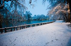 Shakujii Park in the snow , Tokyo JAPAN