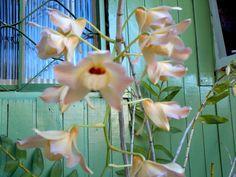 Moda & Stilo: Minhas Orquídeas!!!