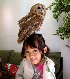 This could be a fantastic idea to get the message out about bird conservation and rehabilitation: http://www.awesomelycute.com/2015/02/london-opens-a-bar-where-you-can-pet-owls/