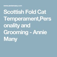 Scottish Fold Cat Temperament,Personality and Grooming - Annie Many