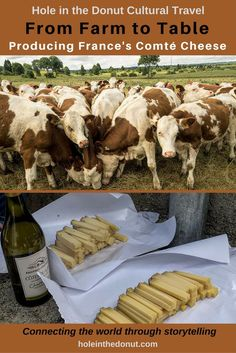 How is Comte Cheese Made? A Journey from Farm to Table in France. Travel in Europe.