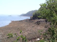 Cony Beach