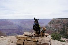 It's common knowledge among pet travelers that our national parks are not pet friendly. But things are different at the South Rim of the Grand Canyon!