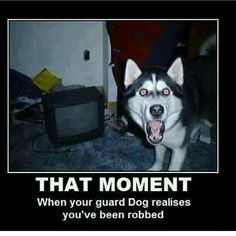 Fun Animal Facts for Kids Crazy, Cool, Funny, Amazing, Interesting Animal Facts For Kids, Fun Facts About Animals, Funny Dogs, Funny Animals, Funny Memes, Funny Husky, Funniest Animals, Dog Memes, Husky Humor