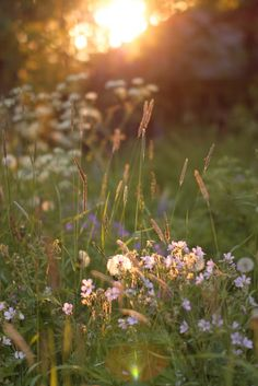 Suomen kesä on. (osa Finnish summer, photo by Satu Laaninen 2015 Mother Earth, Mother Nature, Summer Dream, Light And Shadow, Beautiful Landscapes, Champs, Spring Time, Wild Flowers, Countryside